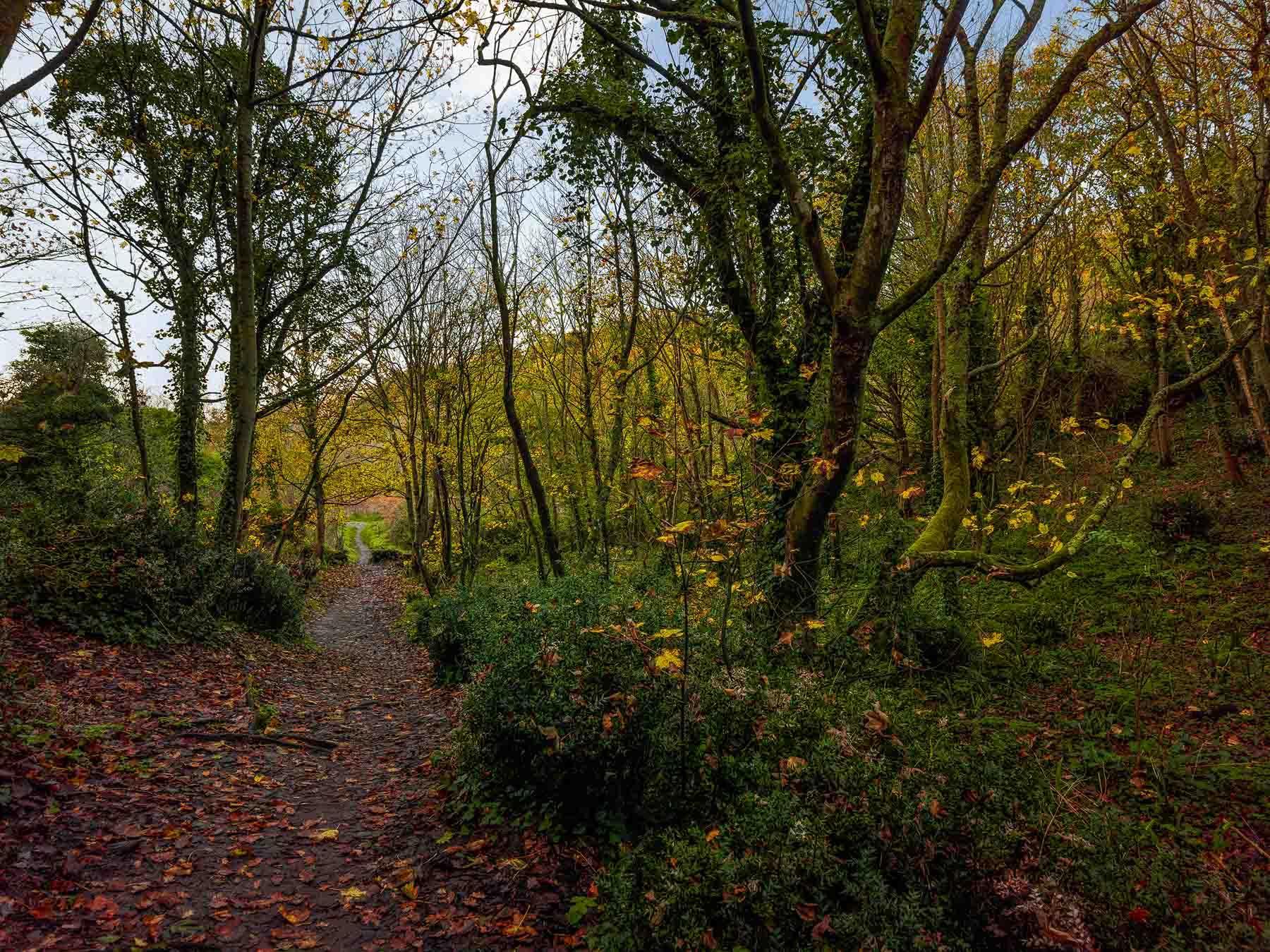 Jersey Woodlands
