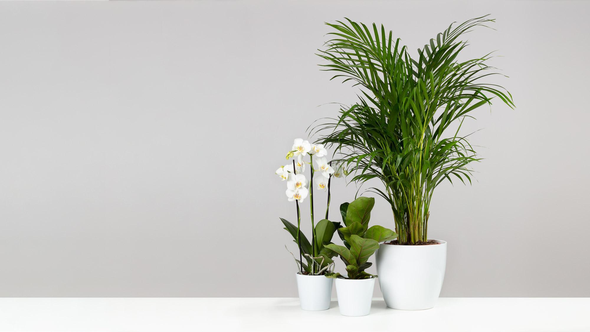 Plants Direct Hero 2